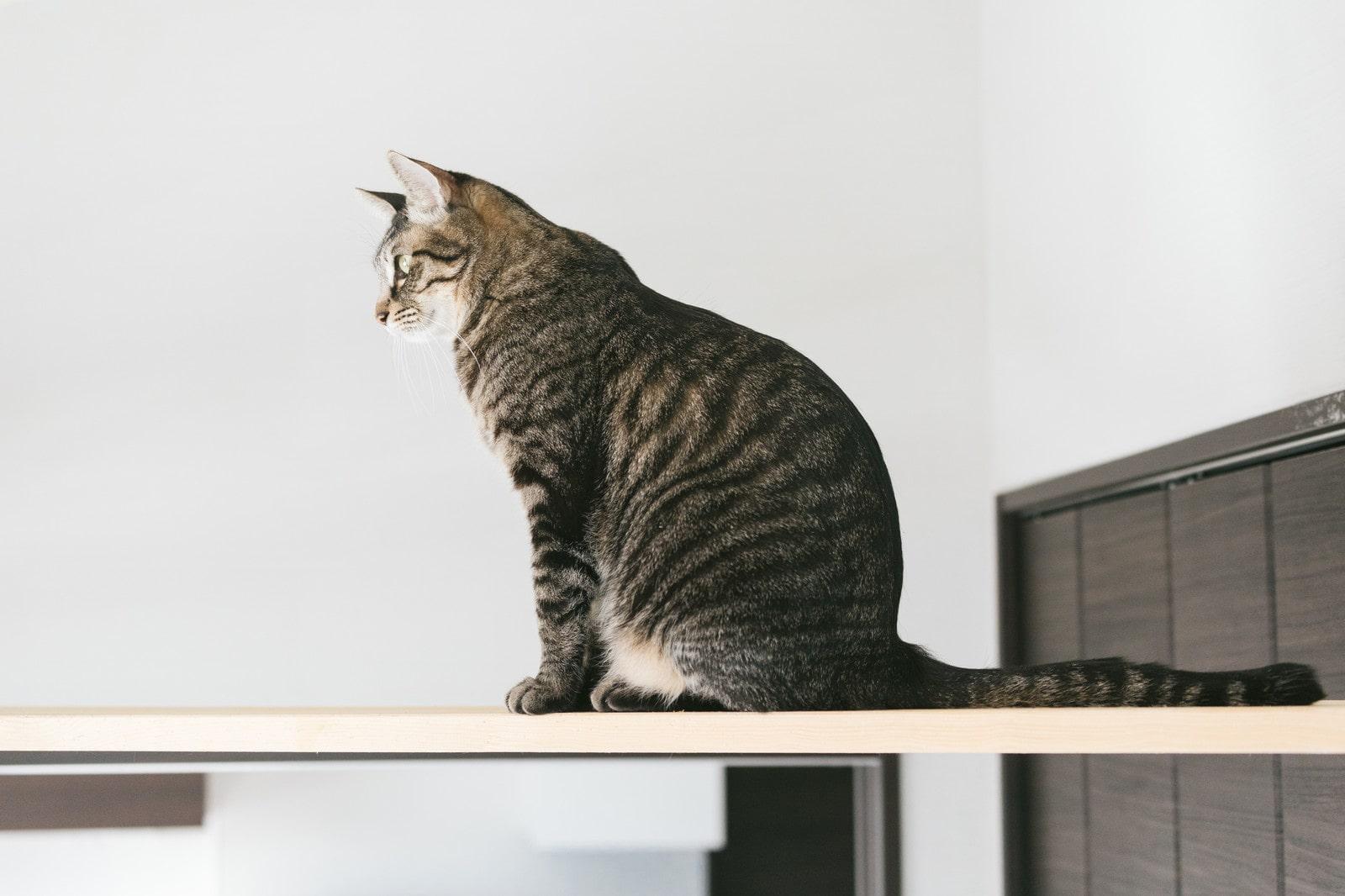 進むか悩んでいる猫