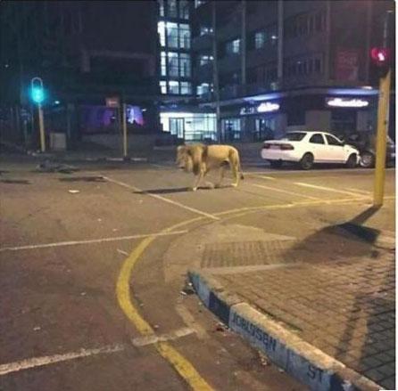 熊本ライオン